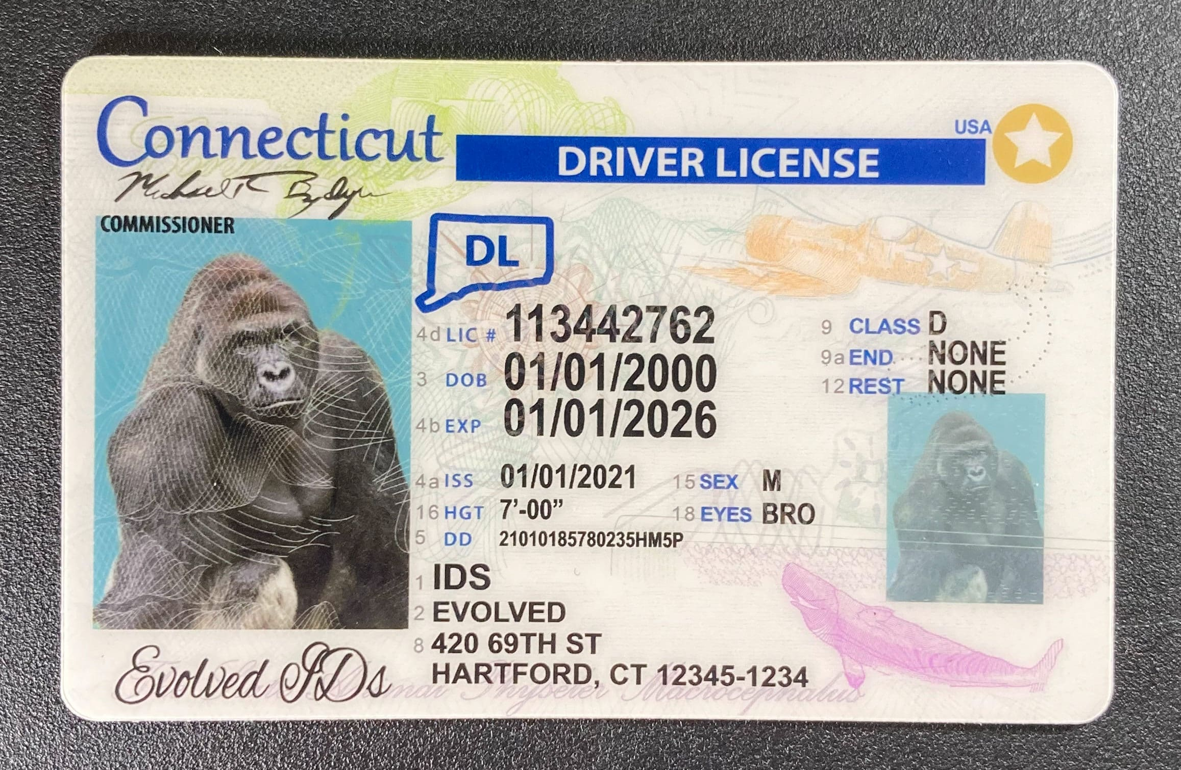 Connecticut Fake ID Front