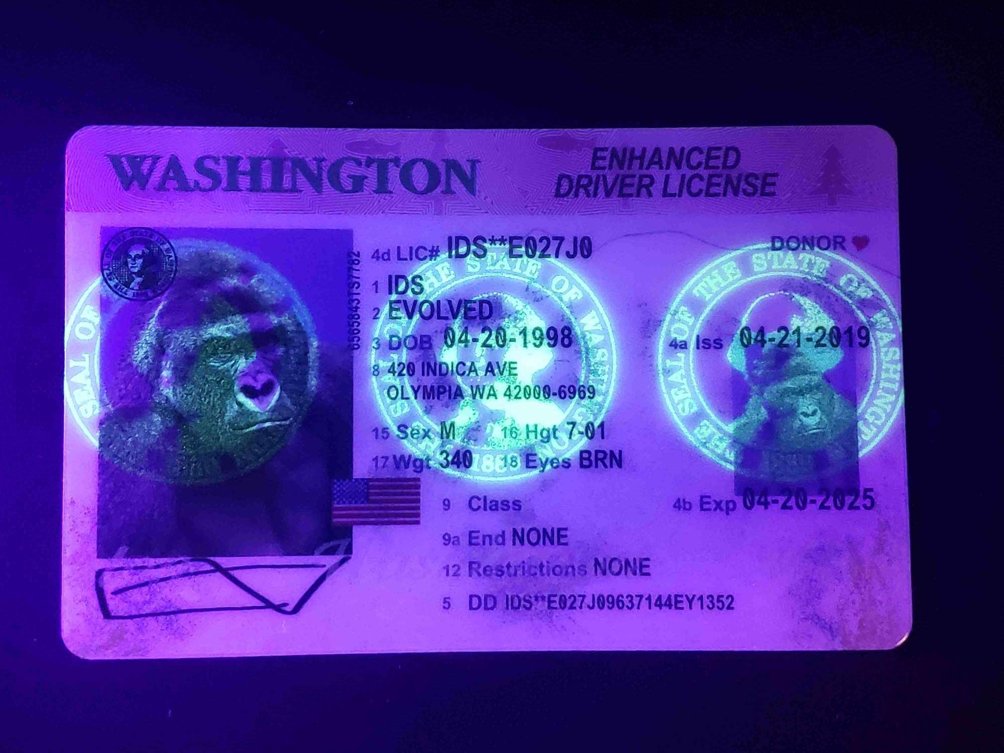 Washington EDL Fake ID UV